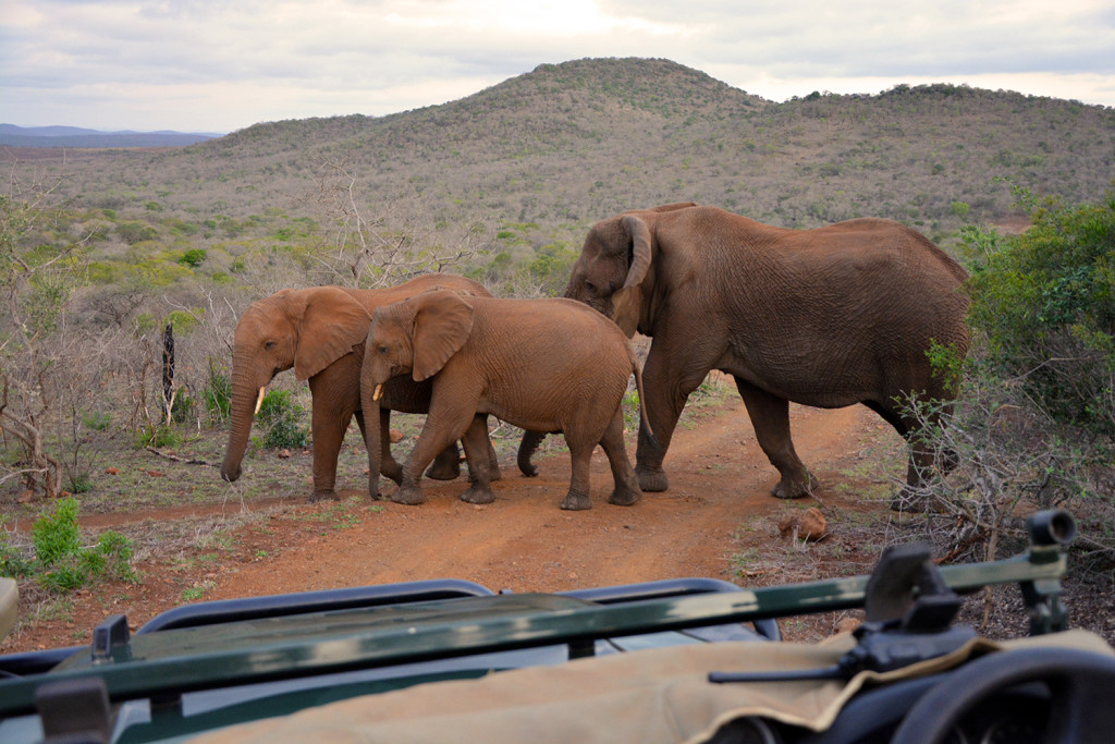 Thanda Elephants