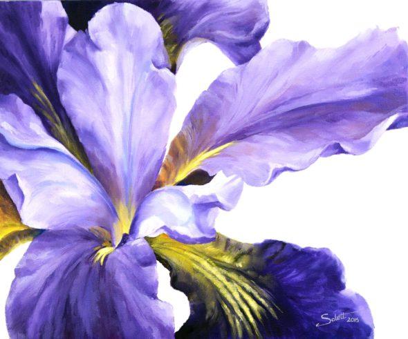 Purple Iris_1small