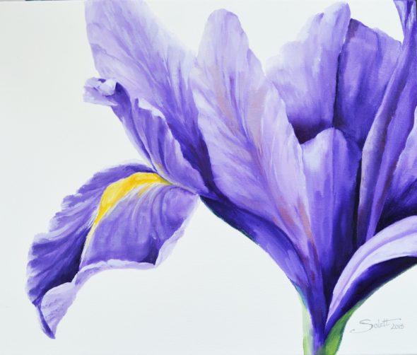 Purple Iris_2small