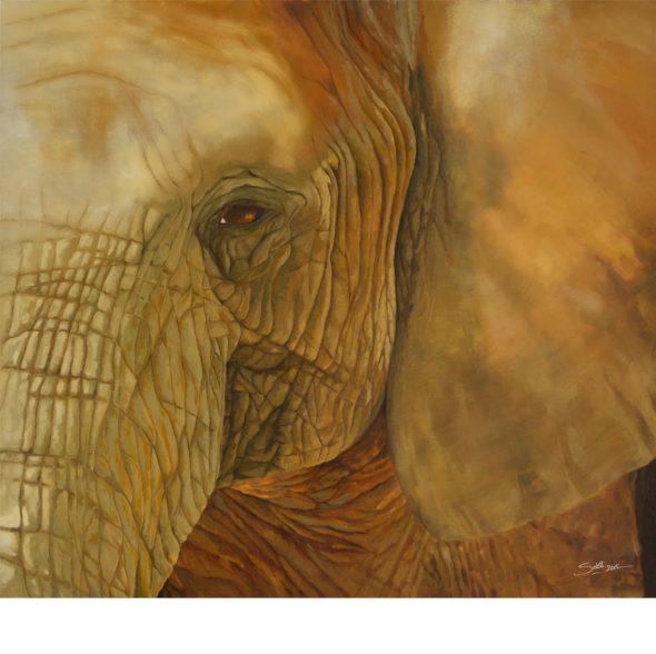 Elephant Close-up 2b